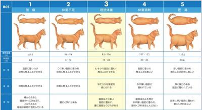 BCS Chart.jpg